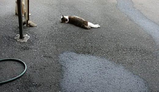 まだまだ暑いですね。😸