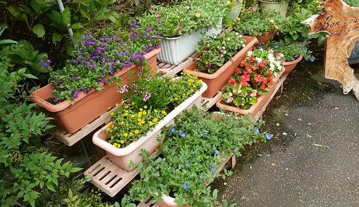 鉢植えの花がすこしづつ増えてきました\(^_^)/