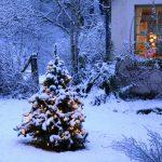 雪の庭に置かれたツリー